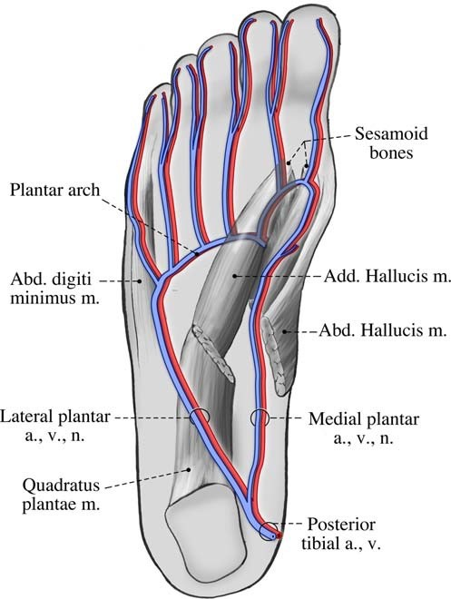 Foot Pain Caused by Plantar Vein Thrombosis - Charter Radiology